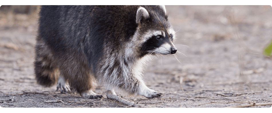 FREE estimates | Elmwood Park, NJ | A-Apache Animal & Pest Services | 201-791-4333