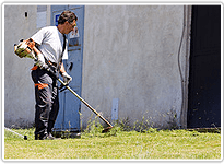 Tree Service | Santa Clarita, CA | Abel's Gardening Service | 661-476-5883