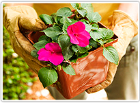 Sata Clarita, CA | 661-476-5883 | Gardening | Abel's Gardening Service