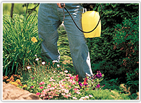 661-476-5883 | Gardening | Abel's Gardening Service | Santa Clatito, CA