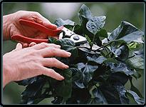 Gardening | Santa Clarita, CA | Abel's Gardening Service | 661-476-5883