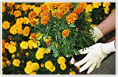 Santa Clarita, CA | Abel's Gardening Service | 661-476-5883 | Gardening