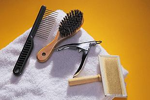 Grooming - Hand-N-Paw - Lisle, IL