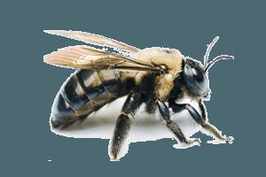 Carpenter Bee Extermination Pittsburgh, PA