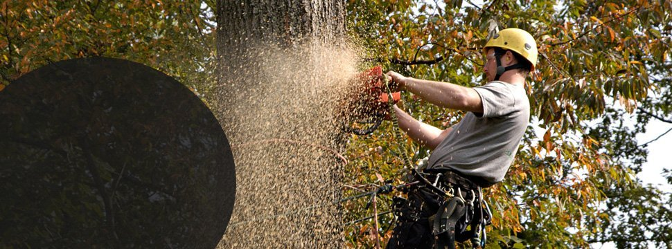 Man using chainsaw to cut the trunk of the tree
