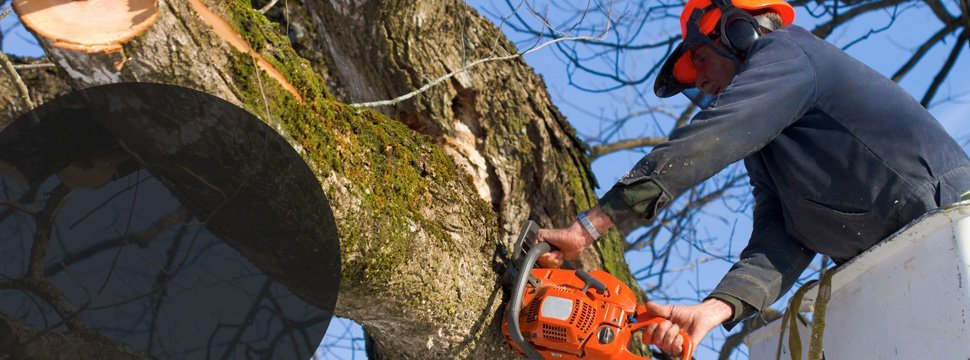 Man removing the large truck of the tree using chainsaw