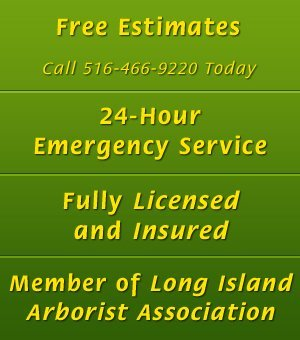 Old Village Tree Service - Stump Grinding - Great Neck, NY