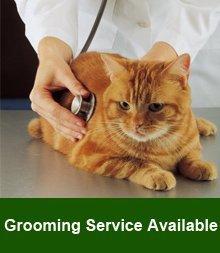 Veterinarians - Quincy, IL - Western Illinois Veterinary Clinic