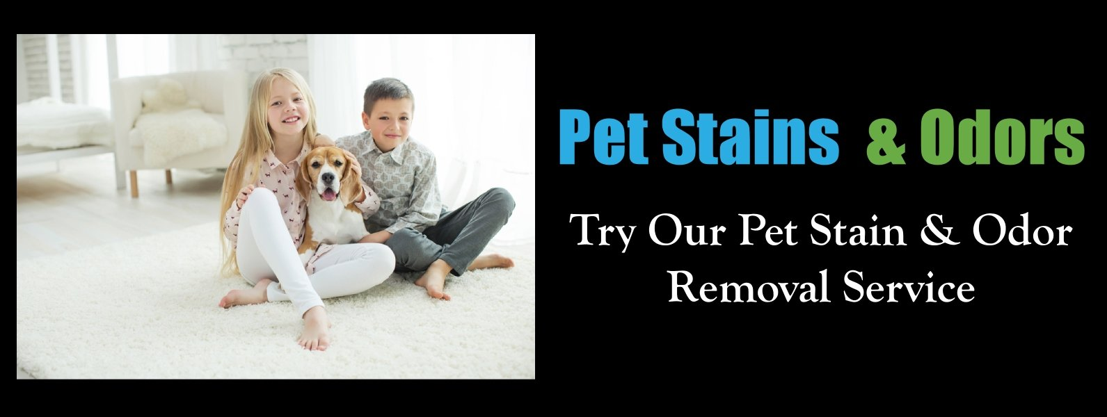pet odor stain