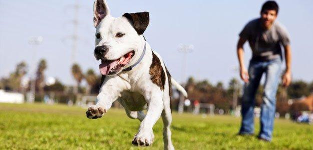 Dog Training | Basic Obedience Training | Marshalltown, IA