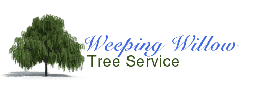 Weeping Willow Tree Service
