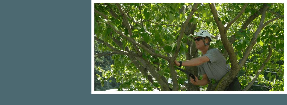 Man cutting tree using chainsaw