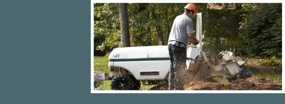 Man removing tree stump using stump grinder