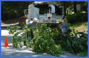 Two men feeding tree branches to a chipper