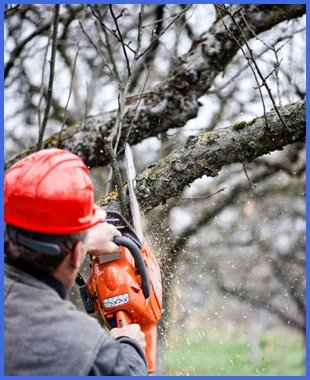 Man cutting trees with chainsaw