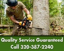 Tree & Stump Service - St. Cloud, MN - Boone's Tree Service - Tree Removal