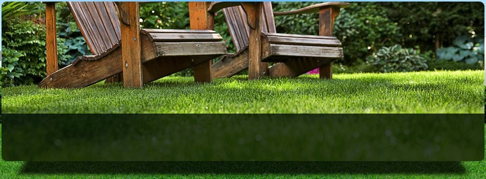 Kentucky Bluegrass sod | Plainsboro, NJ | Tri-County Turf LLC | 609-897-9000