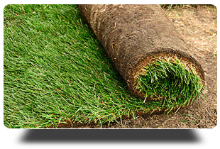 Lawn sod | Plainsboro, NJ | Tri-County Turf LLC | 609-897-9000