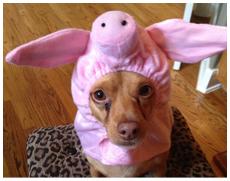 A cute dog wearing a pink pig headgear