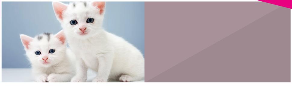 2 white kittens