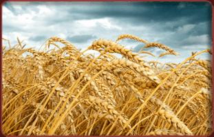 Hay Seed | Marietta, GA | Marietta Seed & Feed | 770-422-5501