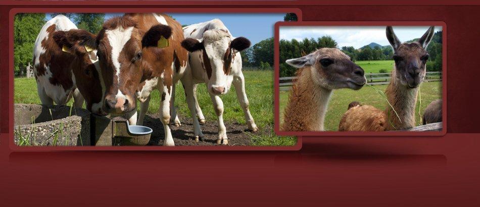 Animal Feed | Marietta, GA | Marietta Seed & Feed | 770-422-5501