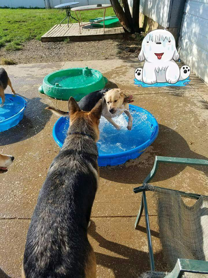 Dog in water tub