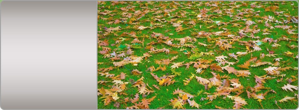 Leaf and winter cleanup | Terre Haute, IN | KD'S Lawn Care | 812-208-8854