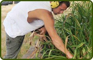 Mulching | Terre Haute, IN | KD'S Lawn Care | 812-208-8854
