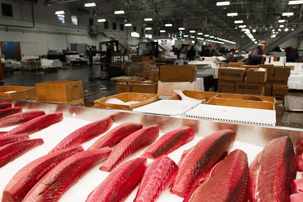 Astoria Fish Depot Fulton Fish Market Bronx Ny