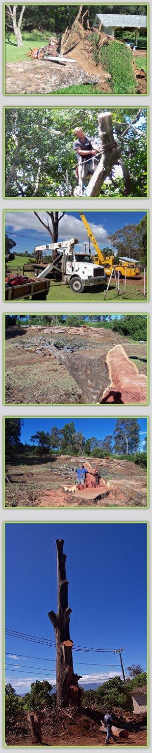 Tree Trimming | Maui, HI | DeCoite Tree Service | 808-573-2756