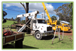 Tree Shaping | Maui, HI | DeCoite Tree Service | 808-573-2756