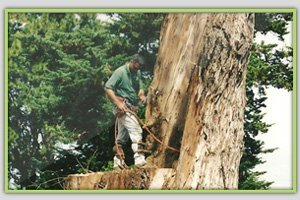 Commercial Tree Services | Maui, HI | DeCoite Tree Service | 808-573-2756