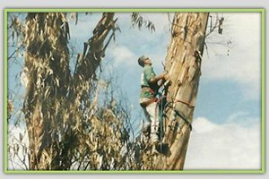 Residential Tree Services | Maui, HI | DeCoite Tree Service | 808-573-2756