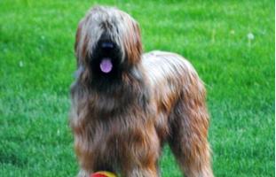 Playful dog in park