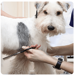 Russells Point, OH  - Dog and Cat Grooming - The Dog House