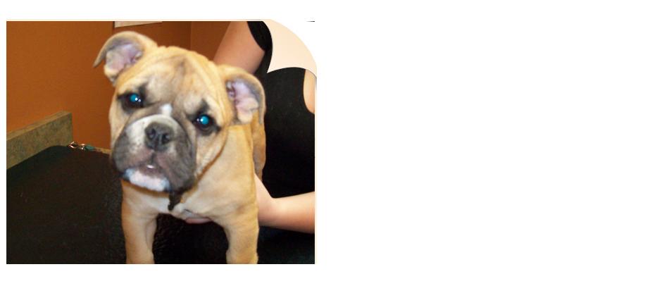 All-Pets Veterinary Clinic – Veterinary Care   Cedar Rapids, IA