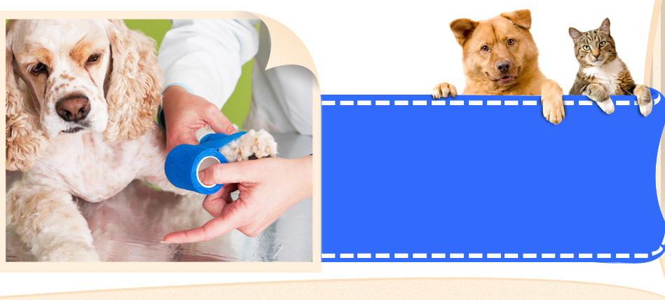 Veterinary care at All-Pets Veterinary Clinic