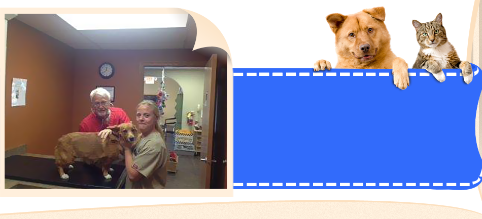 Pet grooming at All-Pets Veterinary Clinic