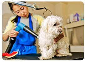 Pet Grooming - Barks & Bubble Grooming - Greenwich, CT
