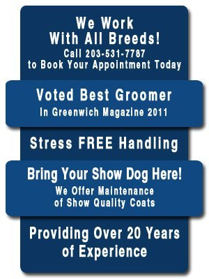 Grooming Services - Greenwich, CT - Barks & Bubble Grooming