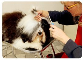 Greenwich, CT - Barks & Bubble Grooming - Pet Grooming