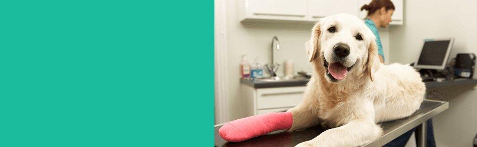 Surgery to Dog