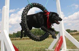 Dog Training for Rehabiitation