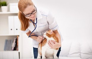 Doctor with pet