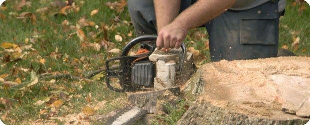 Stump Removal - Ottawa, IL  - Howard Roux Tree Service - Stump Removal