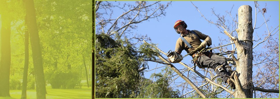 Aardvark Tree Service   Spokane, WA   Aardvark Tree Service   509-891-7650