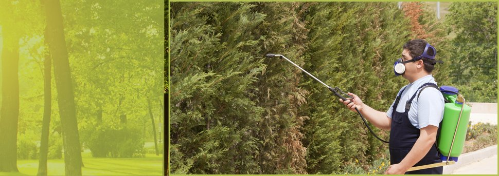 Pesticide Injection | Spokane, WA | Aardvark Tree Service | 509-891-7650