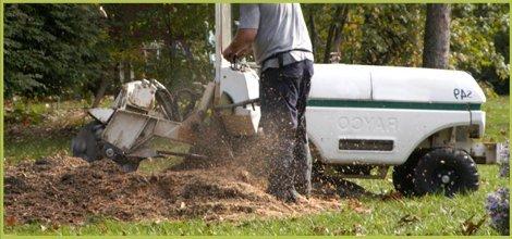 Stump Grinding   Spokane, WA   Aardvark Tree Service   509-891-7650