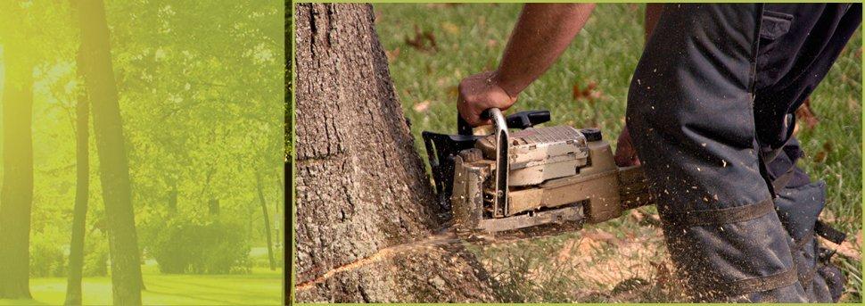 Tree Removal | Spokane, WA | Aardvark Tree Service | 509-891-7650